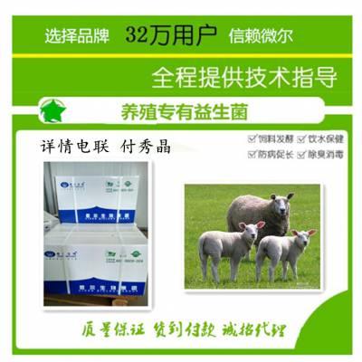 能增加羊食欲又能调节肠道的羊复合益生菌