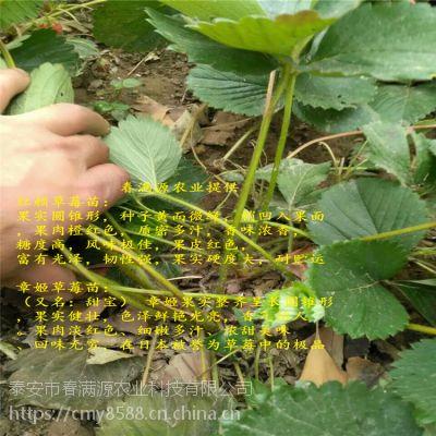 法兰地草莓苗树苗