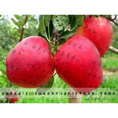 新一代鲁丽苹果树苗栽植及后期管理(附图)