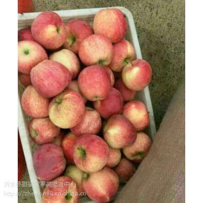 山东新红星苹果产地价格行情