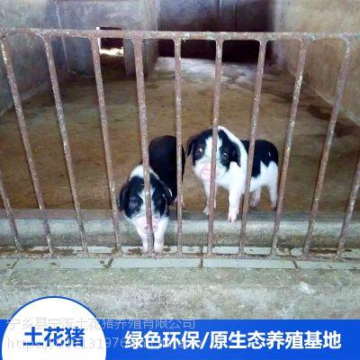 流沙河宁乡土花猪放心食用野猪肉花猪宝宝精排瘦肉厂家供应