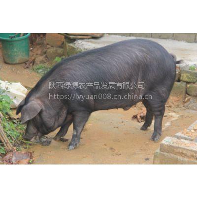 陕西土猪家养土猪土猪肉