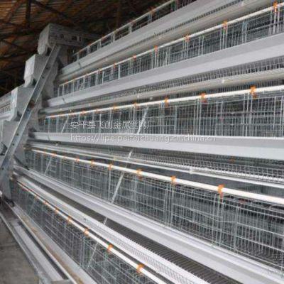 三层鸡笼厂家批发【飞创蛋鸡笼养殖笼】一套能装多少只鸡