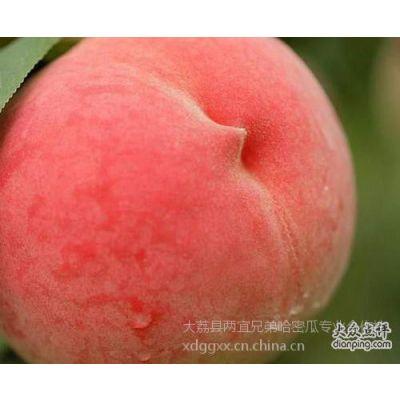 陕西兄弟鲜桃曙光油桃中油五号价格黄肉桃批发