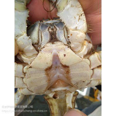 4两公鲜活大闸蟹 安徽无为螃蟹 食用螃蟹 冬季正常供应
