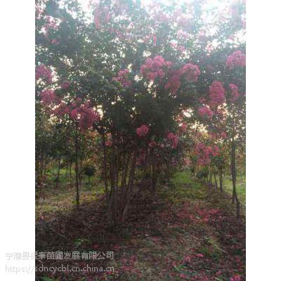丛生紫薇属灌木品种,枝干屈曲光滑,树皮秋冬块状脱落。小枝略呈四棱形。