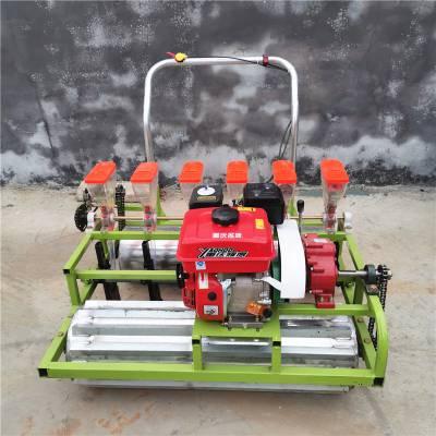 直销蔬菜电动精播机 白萝卜精量种植机 小型免间苗种植机供应