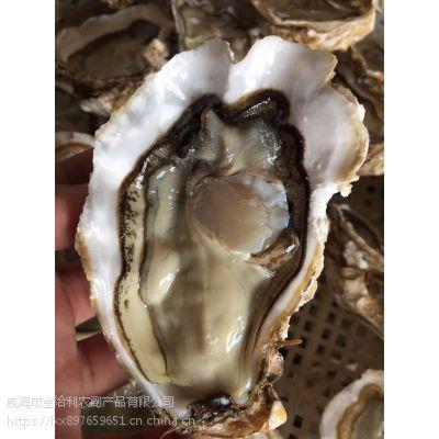 野生鲜活海蛎子2-3两生蚝/牡蛎价格 海鲜贝类水产品