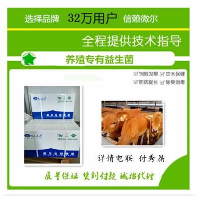 养牛用的复合益生菌哪种效果更好