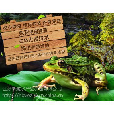 兴化青蛙养殖 江苏青蛙养殖 黑斑蛙养殖技术 蝌蚪种苗供应18910295228