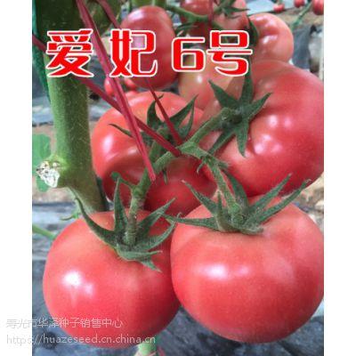 批发越冬早春抗死棵粉果番茄种子—爱妃6号