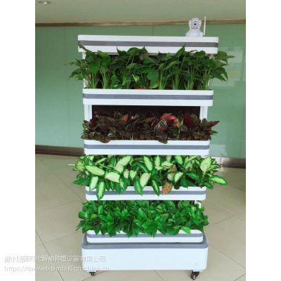 恬薇现代智能水培设备净化空气监测环境调节湿度养护蔬菜静音设计组合个性