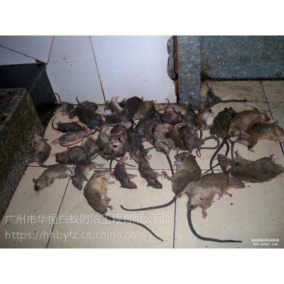 平价老广州 除老鼠灭鼠防鼠 消杀除四害 防治白蚁 服务公司