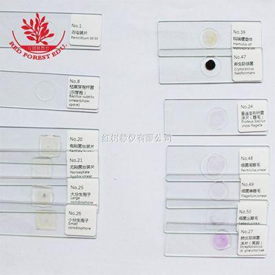 50种典型细菌真菌霉菌套装生物医学微生物显微镜标本细菌切片