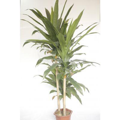 厂家供应新年仿真盆栽 室内工艺品 pu仿真巴西盆景