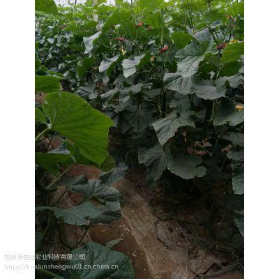 芸苔素作用 生根提苗 解药害