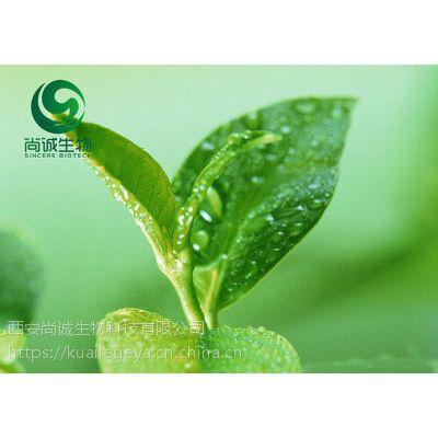 绿茶提取物 茶多酚 尚诚生物