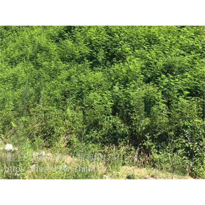 梧州市高速边坡常用边坡绿化灌木种籽有哪些?