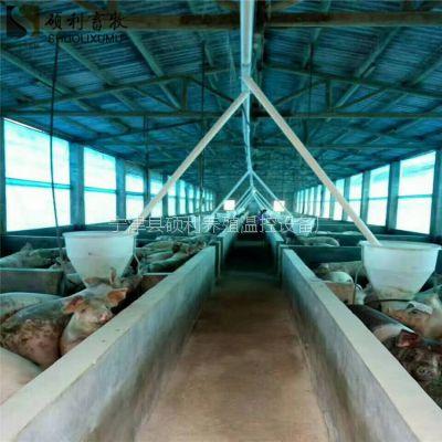 育肥猪舍自动料线上料设备畜牧设备行业专家按照实际需要设计安装自动化喂料系统