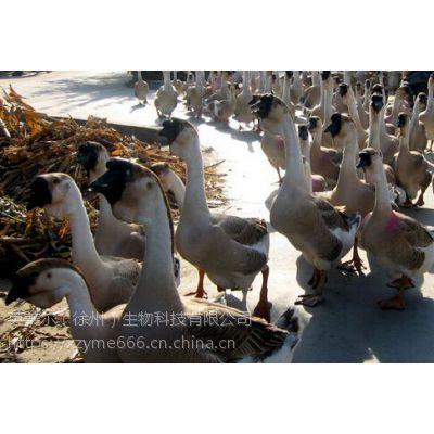 徐州地区的肉鹅饲料厂,经营十六年的大型肉鹅饲料厂