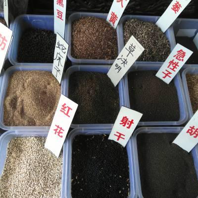 药材种子产地批发@@药材种苗提供种植技术公司