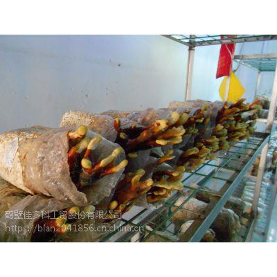 中国农业局推广产品杀虫灯PS-15II型,厂家直销 ,正品销售