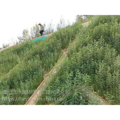 大理市边坡草灌组合复绿护坡灌木种子平方造价