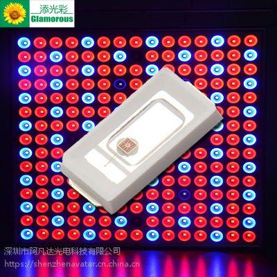LED5730黄光灯珠 高亮5730调粉黄 柠檬黄贴片 0.5W5730黄光590-594