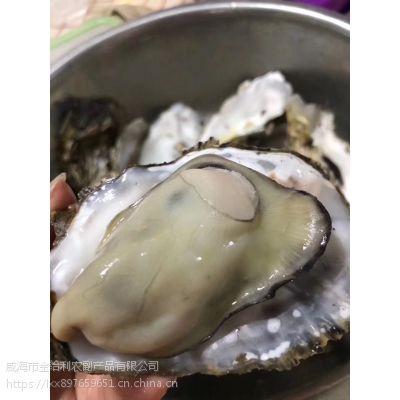 生蚝批发牡蛎批发鲜活生蚝 牡蛎大规格小规格水产