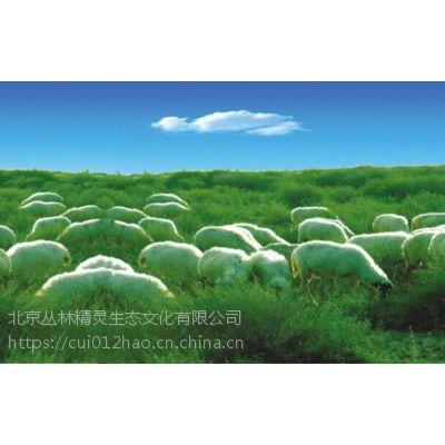 北京丰台区宁夏盐池滩羊销售
