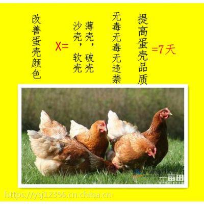 蛋鸡吃什么能让蛋壳厚减少破壳蛋损失