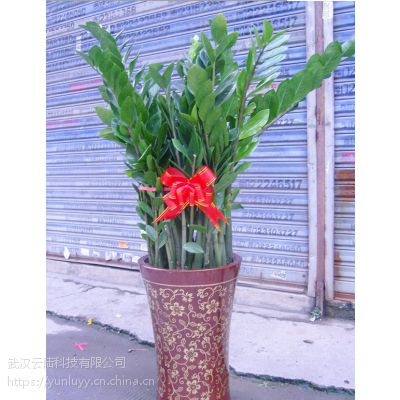 武汉室内外植物出租,武汉办公室写楼花卉植物销售租赁