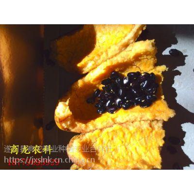 商龙优质少籽发芽率高九月黄金蕉种子