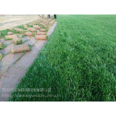 庆阳草坪供应