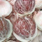 嘉兴柚子树苗厂家供应 优质柚子树苗存活率高