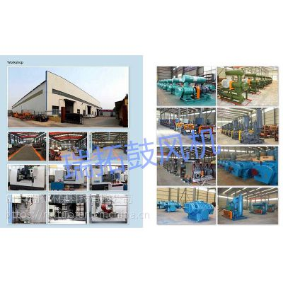 广州三叶圆弧叶型125口径罗茨鼓风机水处理风机厂家