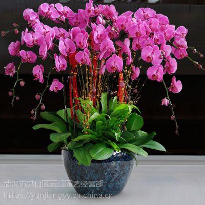 武汉公司绿植盆栽设计方案,室内绿植花卉盆栽销售租摆