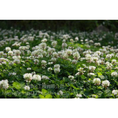 四川成都青羊红三叶价格及图片优质草种销售