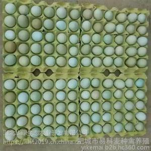 湖北华绿禽业育种有限公司 绿壳蛋 土鸡蛋批发/报价-