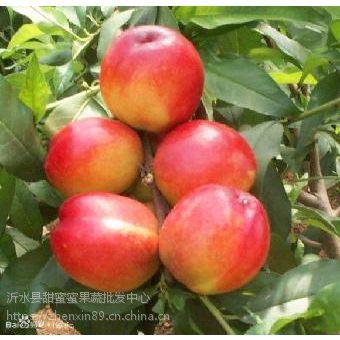 油桃果农电话 油桃***新价格 山东油桃网