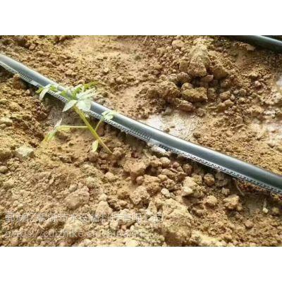 大田果园果树滴灌滴灌管 六分pe滴管多少钱一米