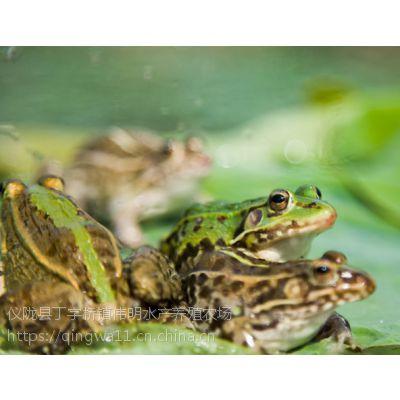 四川青蛙养殖|生态青蛙批发|南充鲜活青蛙供应