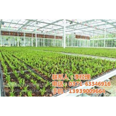 蔬菜种植温室建造,新乡温室建造,鼎鑫温室