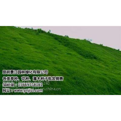昆明绿化草种价格|昆明绿化草种|景江园林绿化(在线咨询)