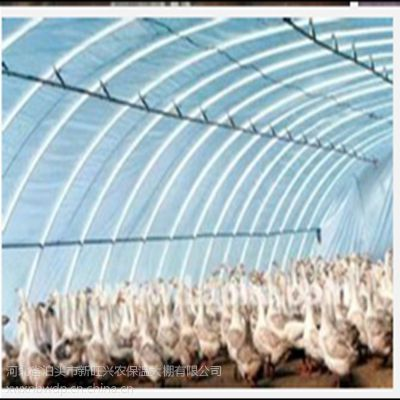 新旺兴农养殖大棚7525保温鸡舍猪舍建设合理