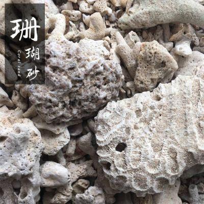 博淼珊瑚石 珊瑚砂 水族造景草缸过滤材料 造景天然石珊