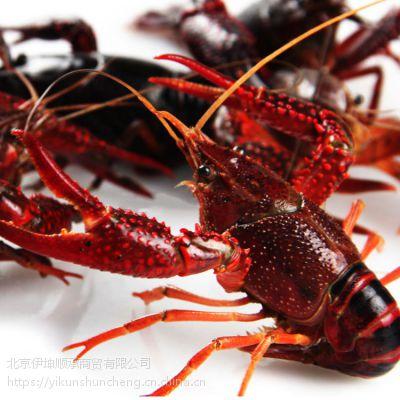 3-6钱小龙虾 鲜活水产 16-20只/斤 产自江苏 食用小龙虾