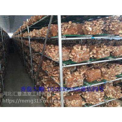 温室香菇技术指导种植 温室香菇技术推广