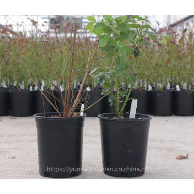 博菲特 厂家直销 可降解塑料育苗花盆 园林园艺用盆 阳台菜地室内盆栽 不易变形