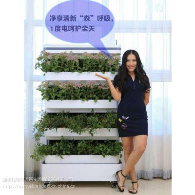 现代智能水培设备智能蔬菜种植机净化器无土栽培设备家居摆设